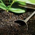 A tea jótékony hatása