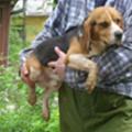 Kísérleti kutyusok várják gazdijukat