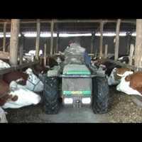 Állatbarát tej