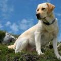 PETA: beteg állatok a kereslet érdekében