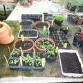 Mégis kertészkedtem