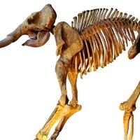 Az MSZP első éve ellenzékben: a testképzavaros mamut