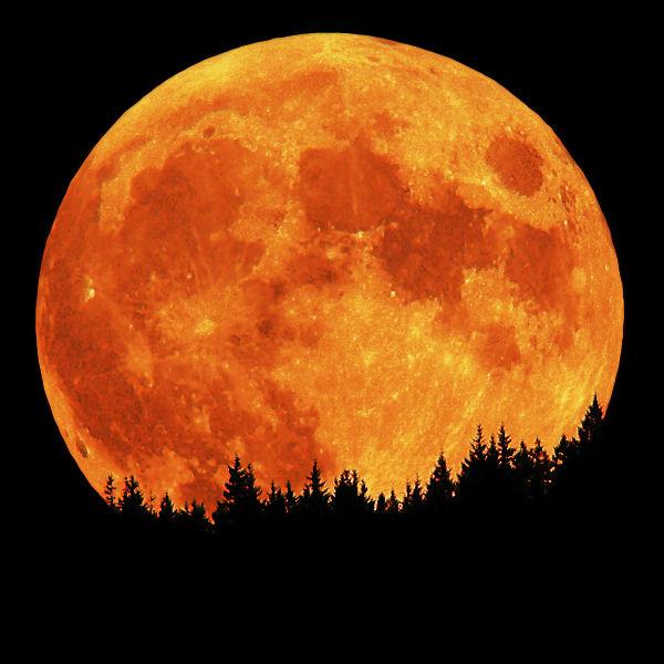 full_moon_1415195653.jpg_600x600
