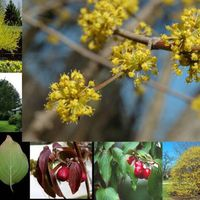 Az őszi erdő gyümölcsei: som és kökény