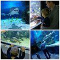Tegnap a Tropicariumban jártunk. Nagyon szuper családi program, amit Patrik két és fél évesen is nagyin élvezett. Csudi jó volt ❤