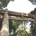 Tokió és más furcsaságok -  A Meiji Jingu megtekintése Shibuyában, majd Ikebukuro és sör