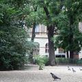 Szent Ferenc madárnyalókák akció // St. Francis bird lollipops