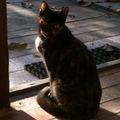 A memóriazavaros macska
