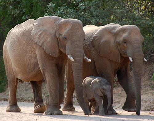 elefantok2.jpg