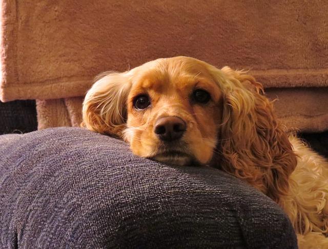 puppy-318161_640.jpg