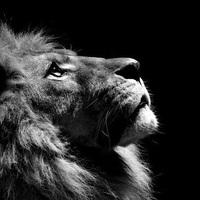 TD Lifestyle: Gyáva nyúlból oroszlán