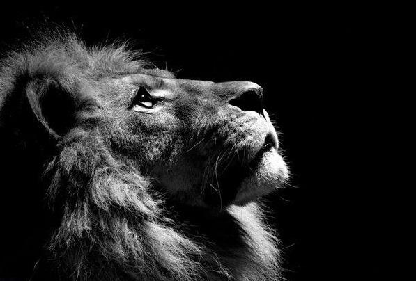 oroszlan.jpg