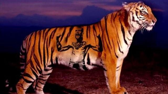 tiger-mcgregor.jpg