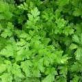 Rádió Bézs: fűszernövények