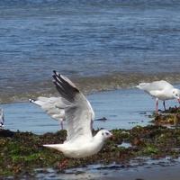 Puerto Madryn és a Valdez félsziget: guanakók, pingvinek, fókák