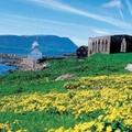 A Feröer-szigeteken divat bálnát fogni
