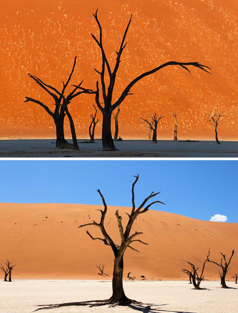 camel-thorn-trees.jpg