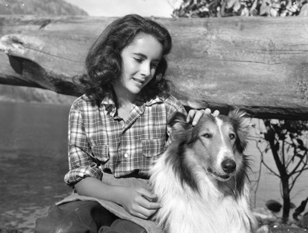 liztaylor_lassiecomehome_1946.jpg
