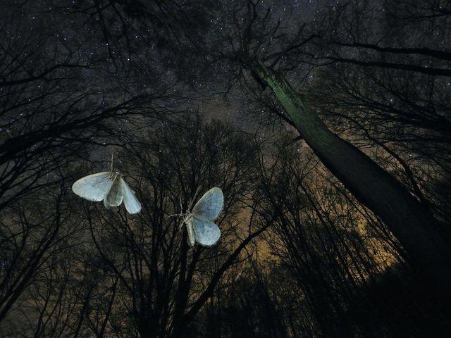 Lenyűgöző természetfotók magyar fényképészektől