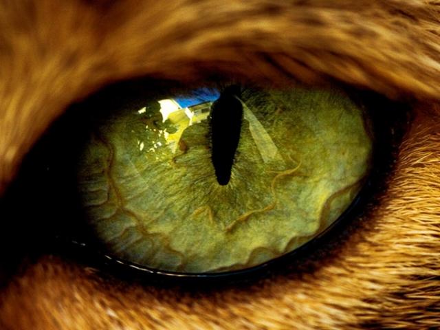 Lóvátett szemek