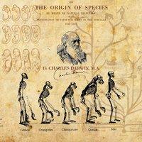Így bizonyítsd az evolúciót – bárkinek