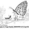 Hernyóból pillangó