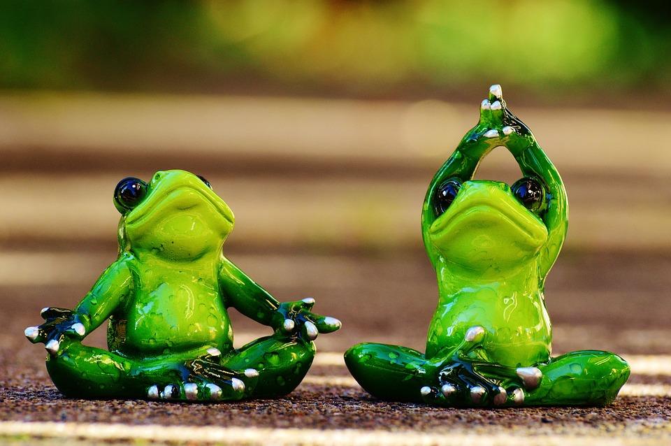 frogs-1030278_960_720_1.jpg