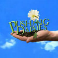 Pushing Daisies Magyarországon!