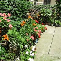 Virágba borult lakás egy nagykörúti udvaron