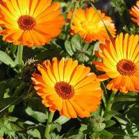 Tavaszi herbatár - toplistás gyógynövények tavaszra