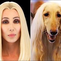 Tíz híresség, aki kiköpött mása a kutyájának!