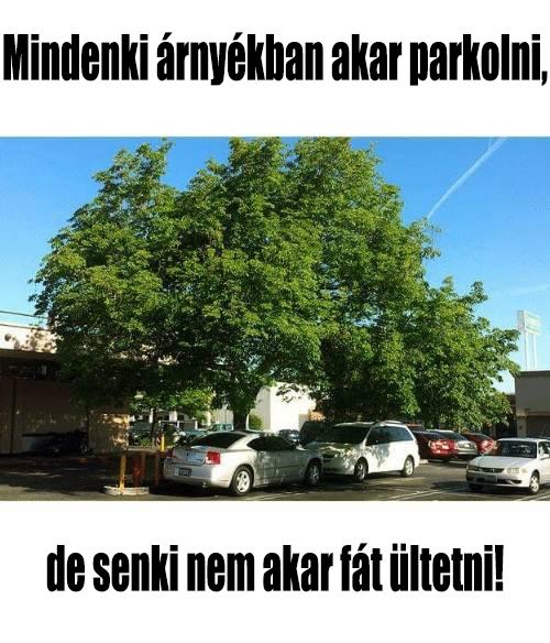parkolas_arnyekban_1.png