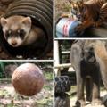 Állatkertek ma – Abnormális viselkedésektől a környezetgazdagításig