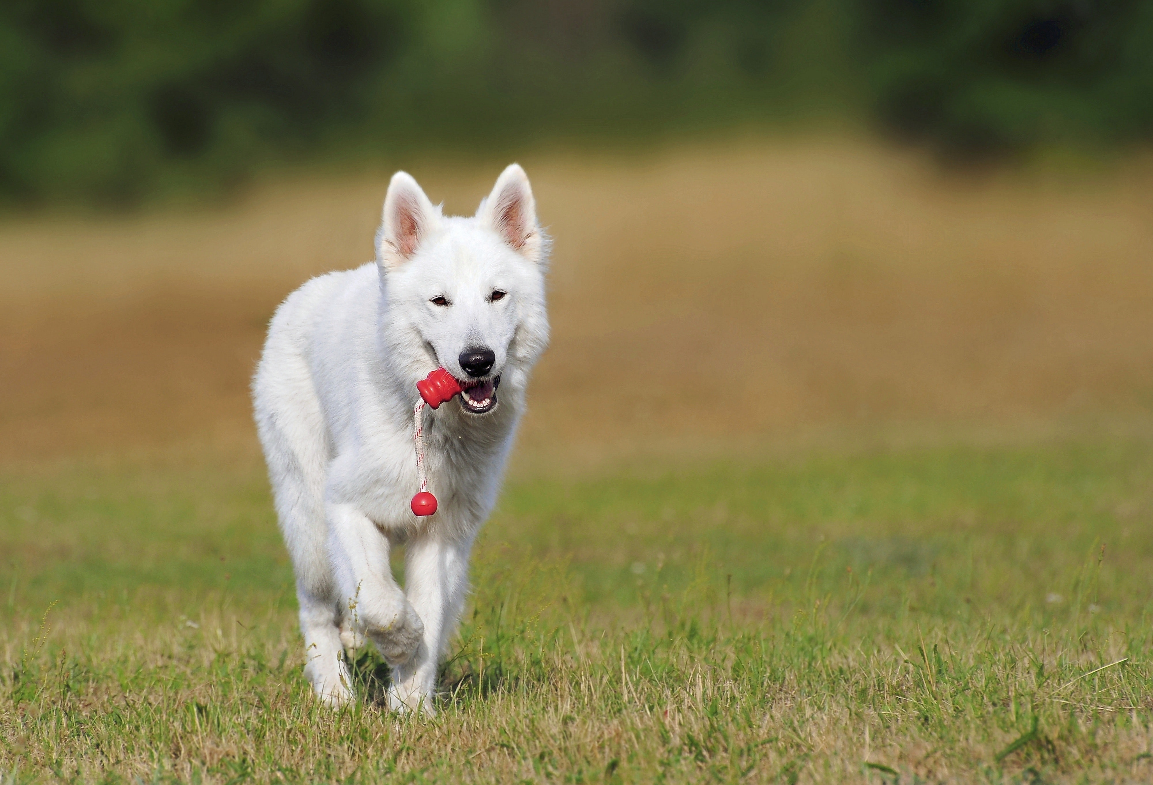 animal-canine-cute-46523.jpg