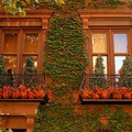 Balkonnövények ősszel