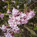 Télen is virágban