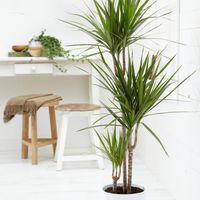 9 növény sötét lakásba