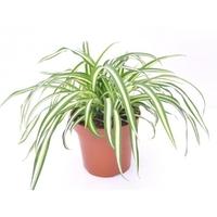 3 növény, hogy jobban aludj