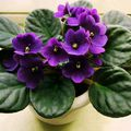 Borítsd virágba a lakásodat télen is!