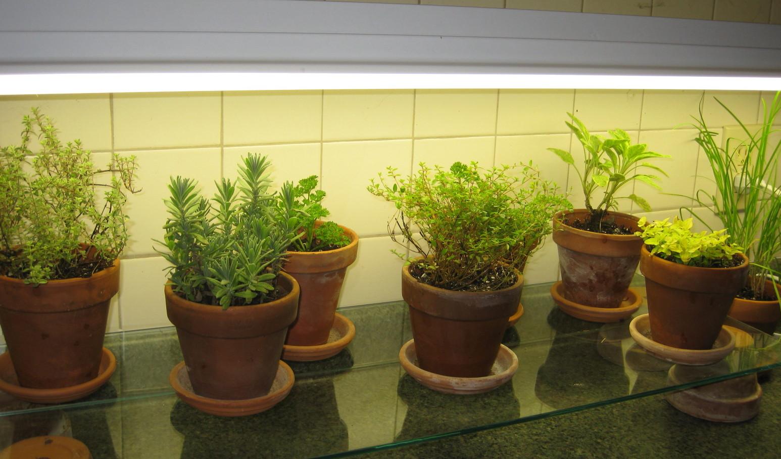Ha növénymegvilágításra szánt fénycsövet teszünk a konyhapult feletti lámpába, máris növénybe borulhatnak a sötét konyhák is!