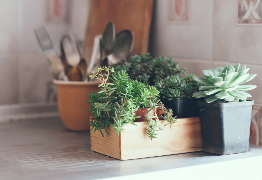 Azonban nem csak a fűszernövények mutatnak jól a pulton!