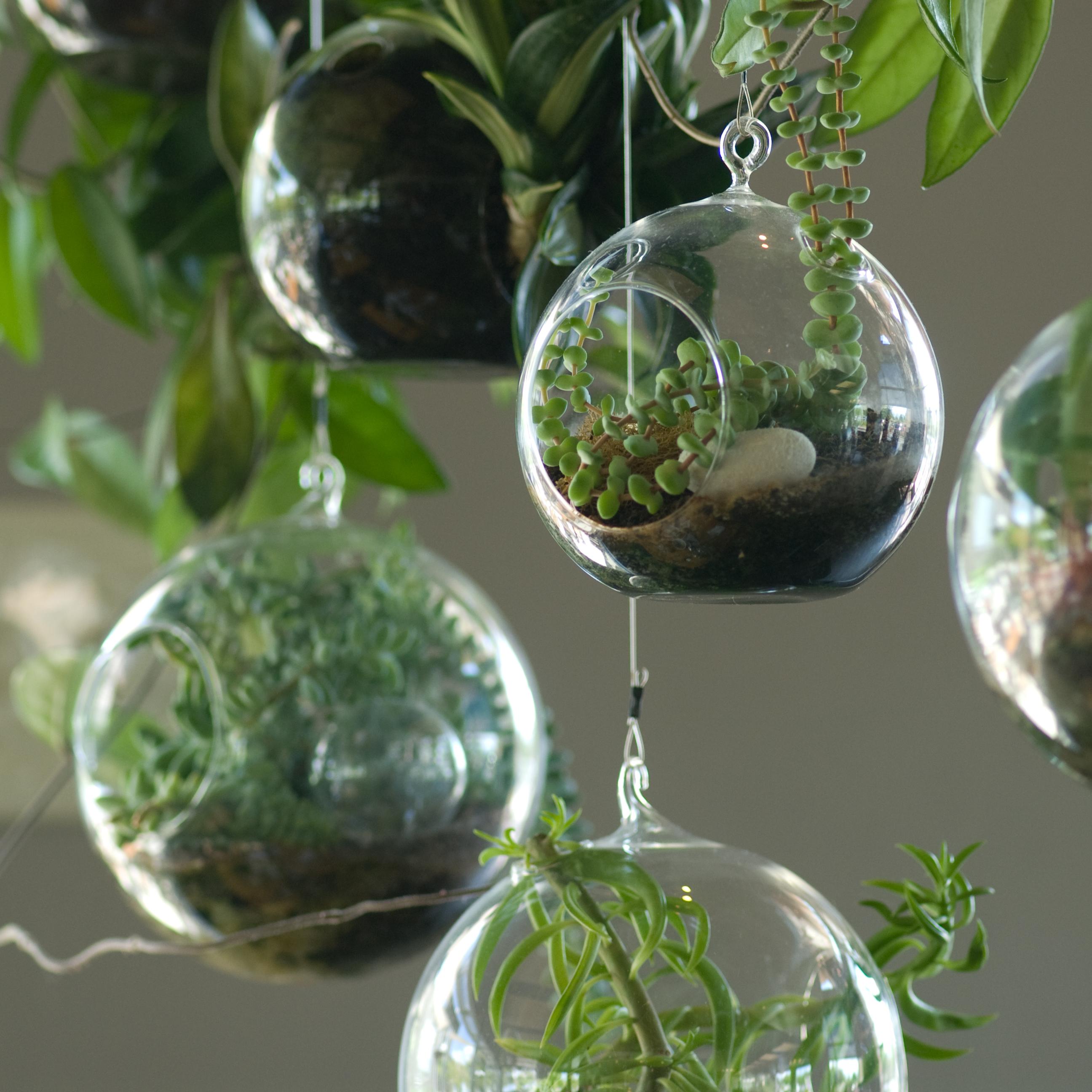 Már sok helyen beszerezhetők azok a látványos üvegbuborékok, melyek biztosan feldobják a lakást...