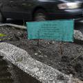 A nap képe: városmajori parkbarátok keresik a virágaikat