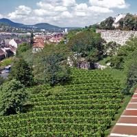 Végre megvalósul a budavári szőlőskert