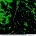 Lenyűgöző világtérkép, melyen nagy felbontásban böngészheted az erdőpusztulást. Nálatok hogyan változott a helyzet  2000 óta?
