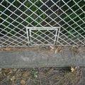 A rejtélyes macskakapuk. Valaki árulja el, mire valók a kertvárosi kerítések csöpp ajtói