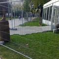 Ezt ki engedélyezte? Újabb buhera kávézót építenek az Erzsébet tér gyepére, lassan nem marad semmi a parkból