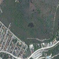Létezik-e a Nagy-Magyarország alakú erdő a budai hegyekben?