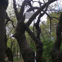Miért van egy pesti parkban három méter magasan egy apró betűs tábla? Mert a célközönség épp arra