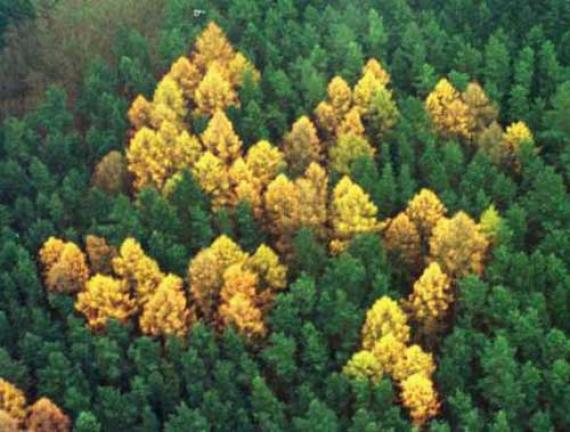 site-of-the-forest-swastika.14525.large_slideshow[1].jpg